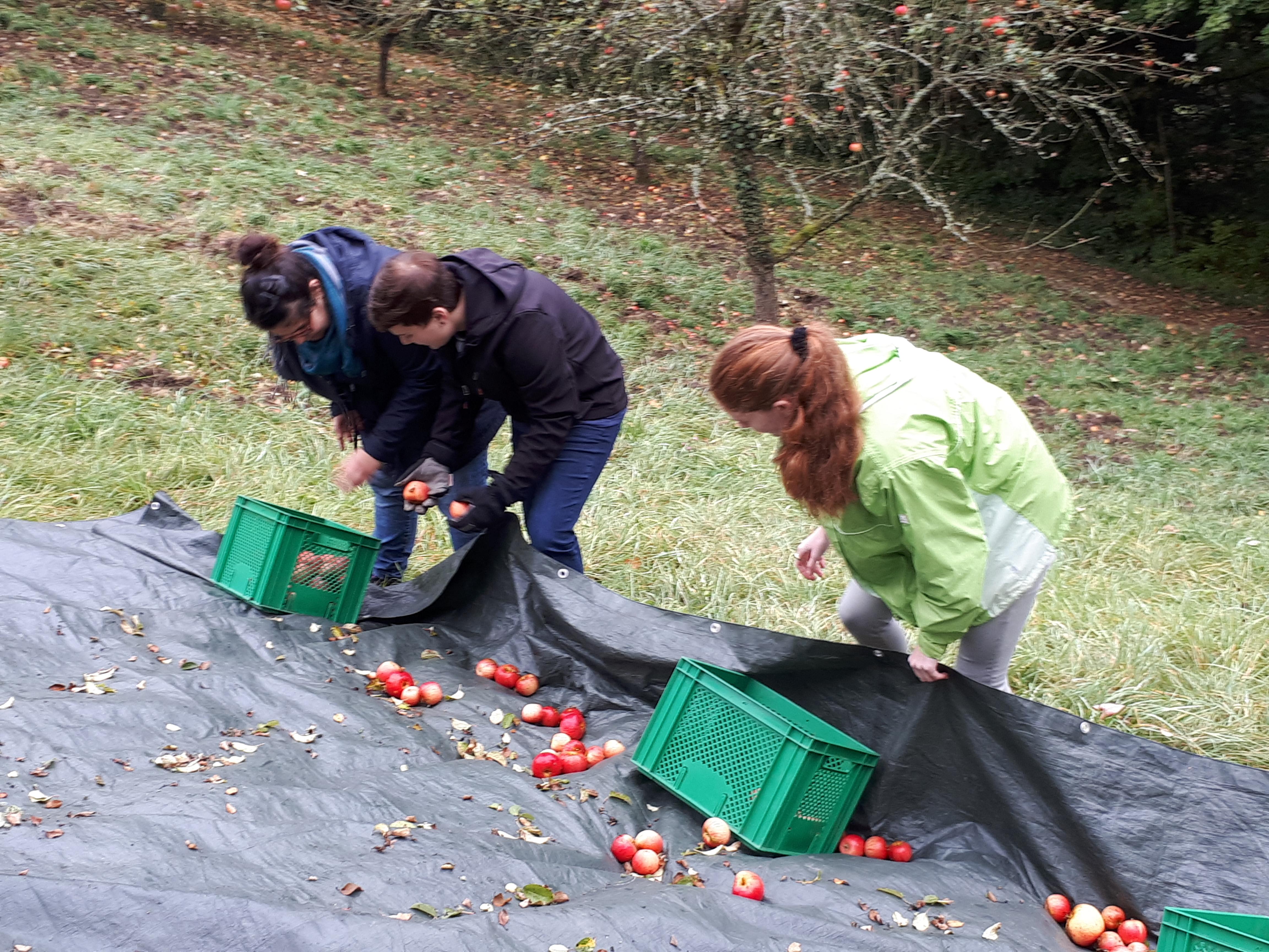 Apfelernte im Bliesgau